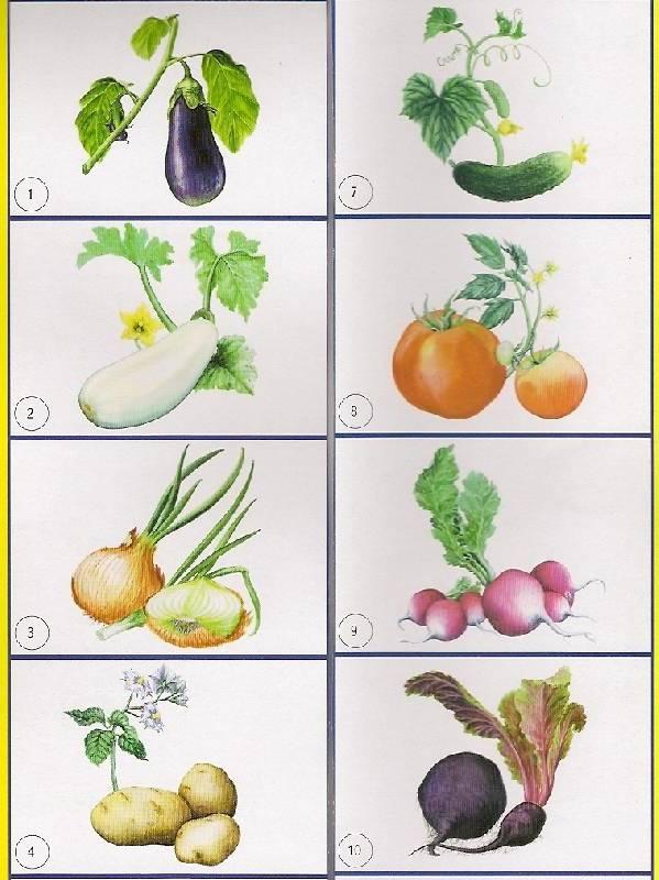Иллюстрация 1 из 12 для Лото: Овощи 774 (350х500) | Лабиринт - игрушки. Источник: khab