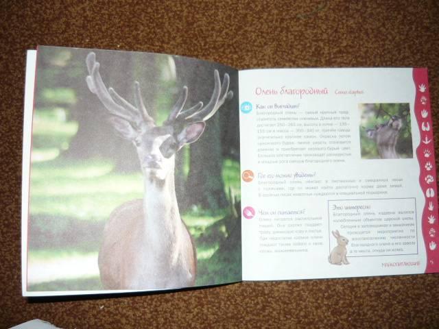 Иллюстрация 1 из 9 для Кто живет в лесу - Гудрун Хоффман | Лабиринт - книги. Источник: Ромашка:-)