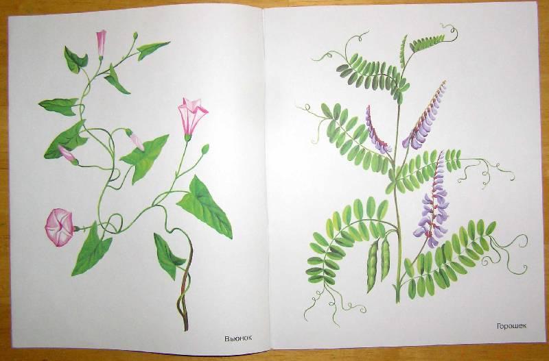 знакомство с окружающим травы в картинках