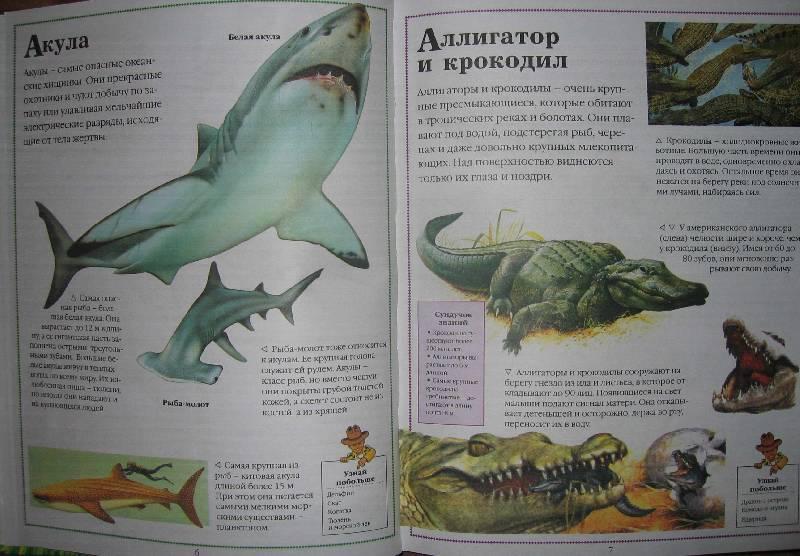 Иллюстрация 1 из 5 для Все о животных от А до Я   Лабиринт - книги. Источник: zanik