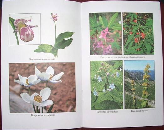 Источник. следующая. книги Красная книга России.  Растения.