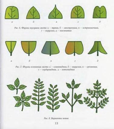 Читатель познакомится с уникальными разработками автора - способами плетения деревьев... бисероплетение.