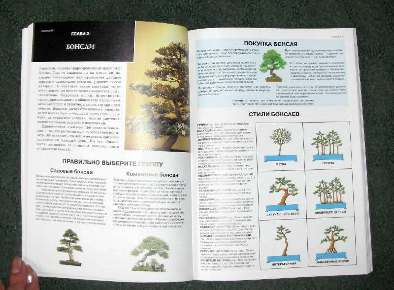 Иллюстрация 1 из 40 для Все о комнатных растениях. Книга вторая - Дэвид Хессайон | Лабиринт - книги. Источник: Катерина