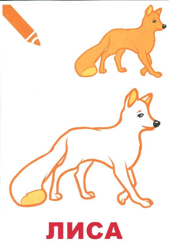 Как рисовать лесных животных для детей