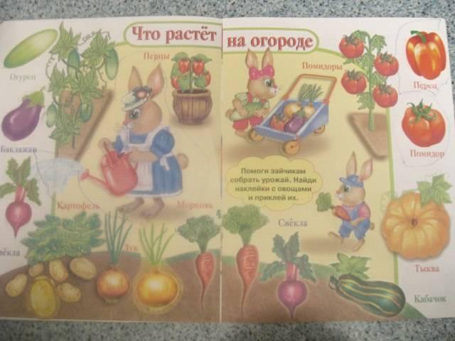 Иллюстрация 1 из 7 для Овощи и фрукты | Лабиринт - книги. Источник: Черкасова  Анна Валерьевна