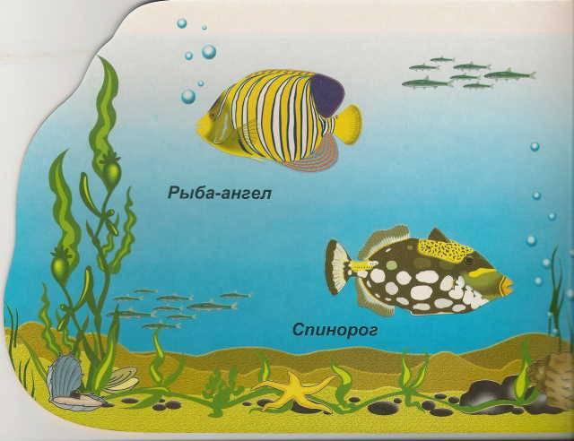 Иллюстрация 1 из 14 для Морские рыбы (вырубка) | Лабиринт - книги. Источник: _Елена_