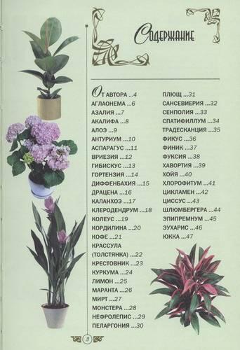 Иллюстрация 1 из 2 для Комнатные растения. Целительные и магические свойства - Джулия Крейсс   Лабиринт - книги. Источник: novela08