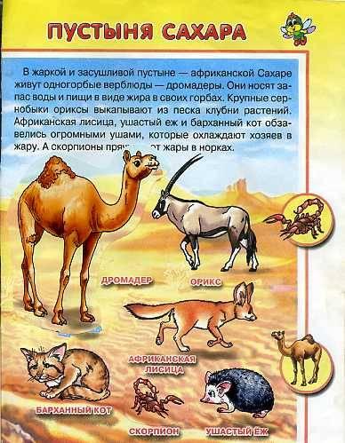Иллюстрация 1 из 5 для Живая планета/Уроки Стрекозы - Юлия Школьник | Лабиринт - книги. Источник: Дианна