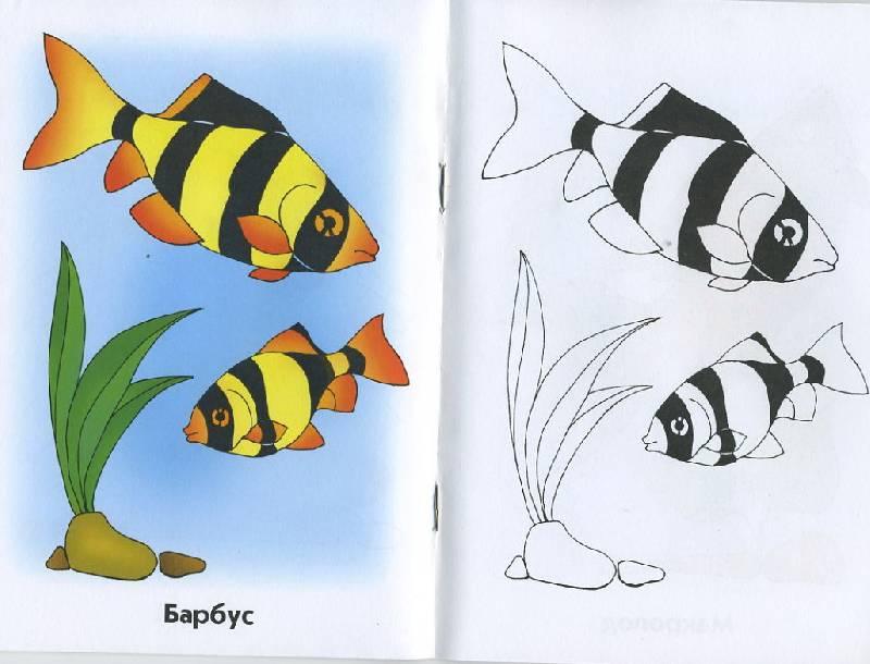 Рыбки картинки для детей цветные - 48a5c