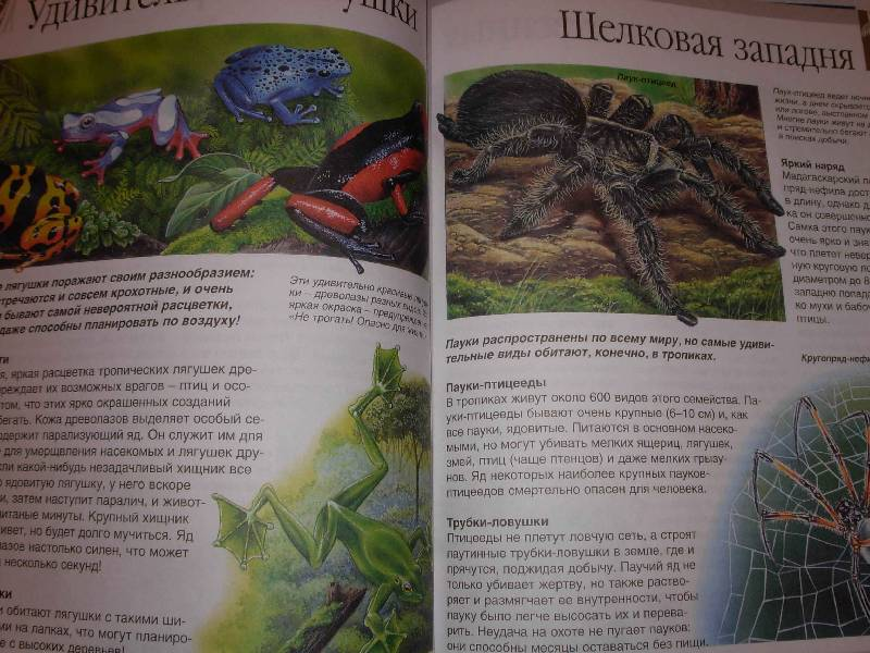 Иллюстрация 1 из 13 для Мир леса - Генри Эйнар | Лабиринт - книги. Источник: --- Гера ---