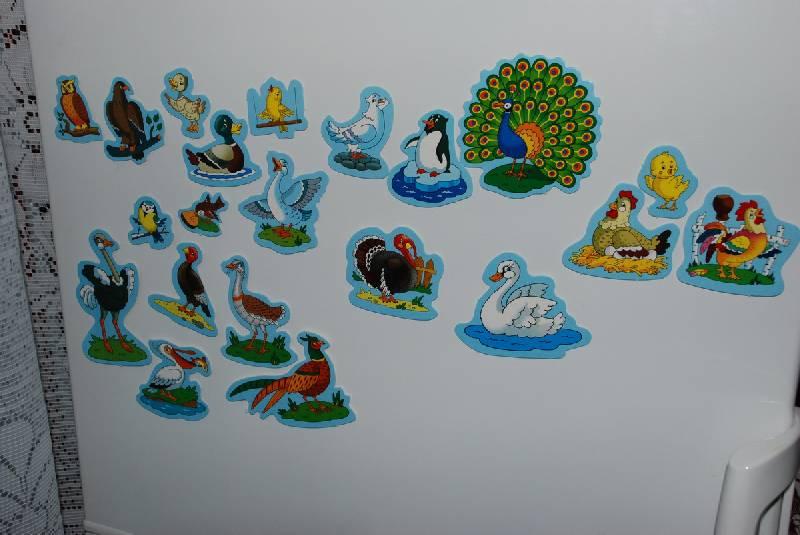 Иллюстрация 1 из 5 для Дикие и домашние птицы   Лабиринт - игрушки. Источник: Lared