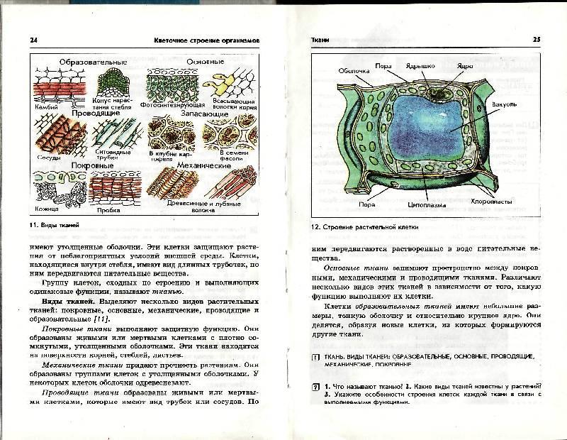Поурочные планы по биологии 9 класс