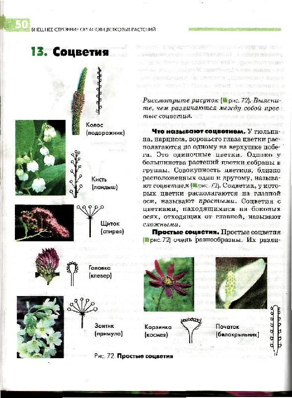 Биология растения бактерии грибы