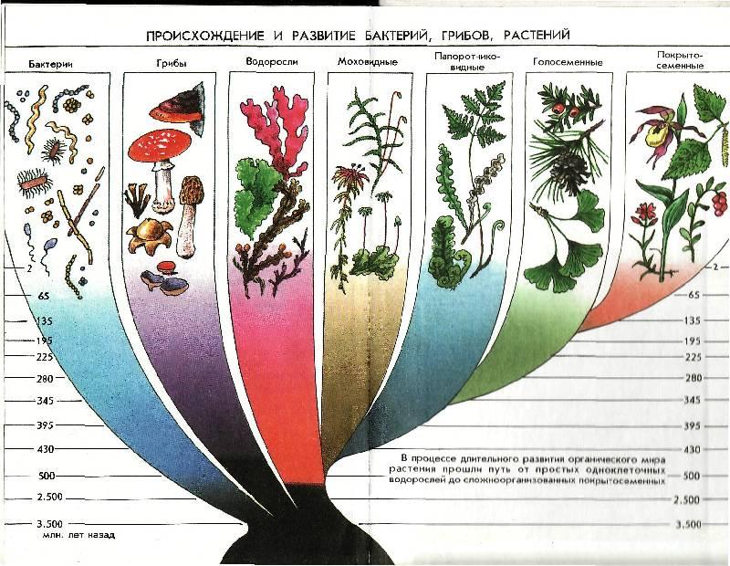 Иллюстрация 6 из 6 для книги биология