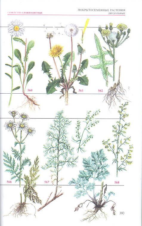атлас определитель растении с фото