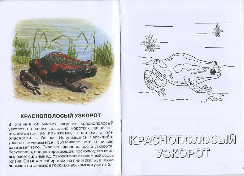 Иллюстрация 1 из 4 для Хамелеон Меллера. Живой мир Африки | Лабиринт - книги. Источник: Pallada