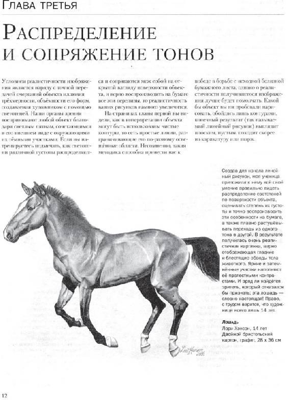 Иллюстрация 1 из 24 для Учимся рисовать лошадей вместе с Ли Хэммонд - Ли Хэммонд | Лабиринт - книги. Источник: Кнопа2