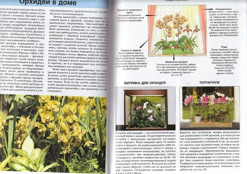 Иллюстрация 1 из 30 для все об орхидеях