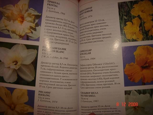 Иллюстрация 1 из 7 для Нарциссы - Нина Ипполитова | Лабиринт - книги. Источник: Исаенкова Мария Александровна