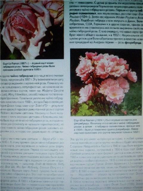 Иллюстрация 1 из 23 для Все о розах - Дэвид Хессайон | Лабиринт - книги. Источник: света