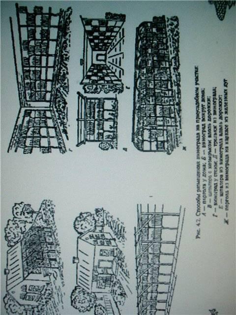 Иллюстрация 1 из 23 для Северный виноград - Ромуальд Лойко | Лабиринт - книги. Источник: света
