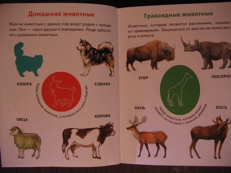 Иллюстрация 1 из 13 для Мир вокруг нас - Юрий Гурин | Лабиринт - книги. Источник: Крошка Сью
