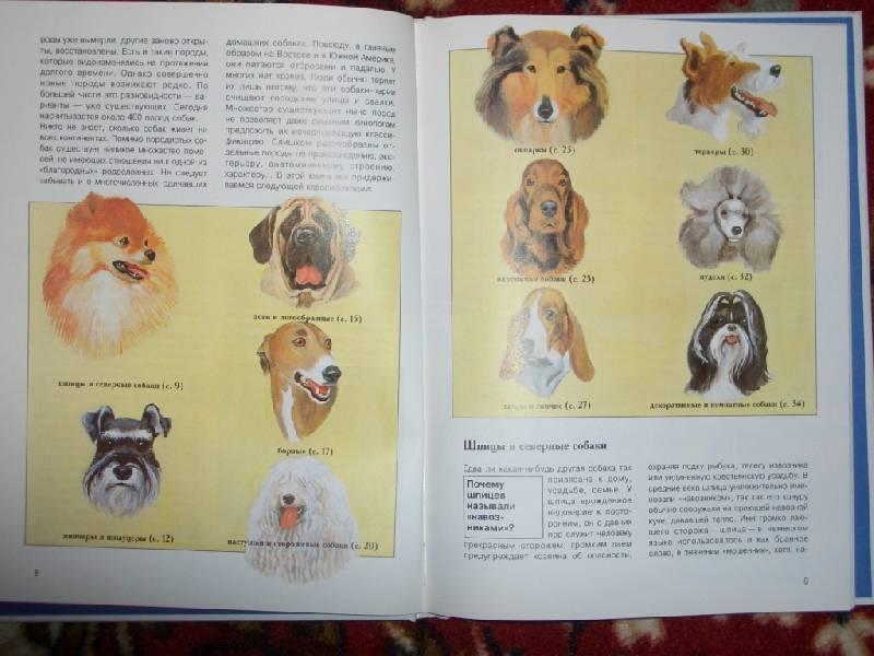 Иллюстрация 1 из 19 для Собаки - Петер Тайхманн | Лабиринт - книги. Источник: sher