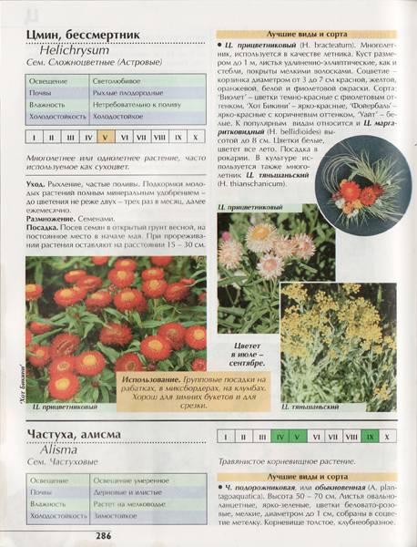 Иллюстрация 1 из 8 для Цветы в саду, или 1000 цветов для вашего сада - Валентин Воронцов | Лабиринт - книги. Источник: Count de Plagny