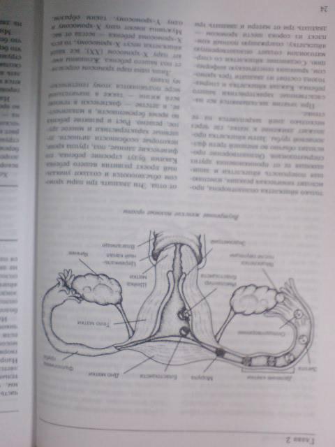 Иллюстрация 1 из 11 для Новый гид по беременности, родам и уходу за новорожденным - Симкин, Вэлли, Кепплер   Лабиринт - книги. Источник: Настёна