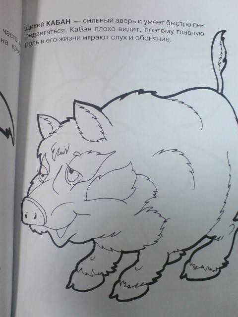 Иллюстрация 1 из 5 для Суперраскрасушки (белочка) | Лабиринт - книги. Источник: Настёна