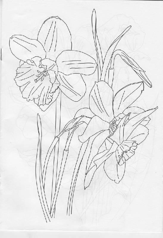 Иллюстрация 3 из 14 для раскраска цветы
