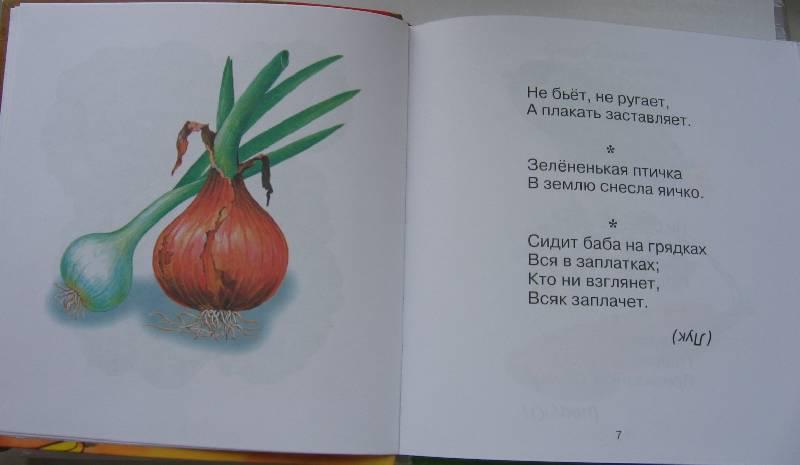 Иллюстрация 1 из 15 для Загадки, песенки, сказки | Лабиринт - книги. Источник: Крошка Сью