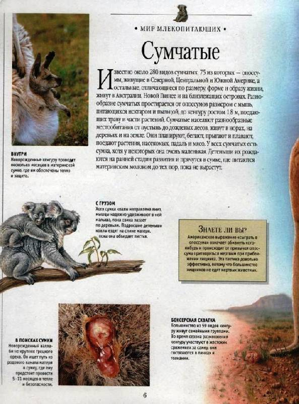 Иллюстрация 1 из 17 для Самая красивая энциклопедия животных | Лабиринт - книги. Источник: Zhanna