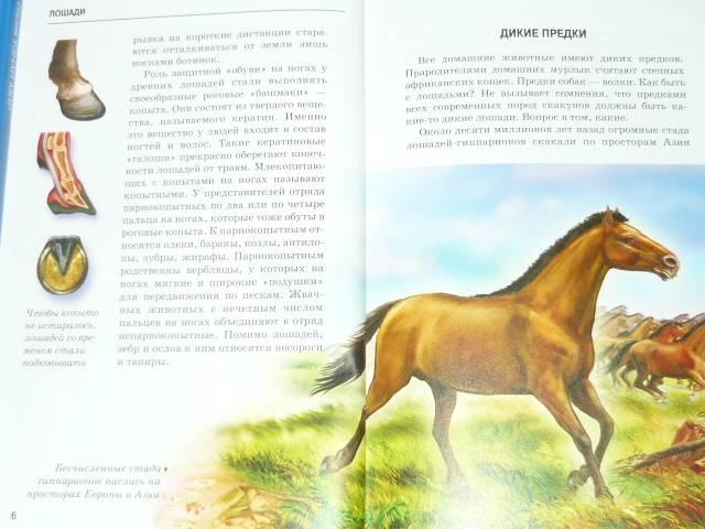Иллюстрация 1 из 20 для Лошади - Сергей Афонькин | Лабиринт - книги. Источник: Ромашка:-)