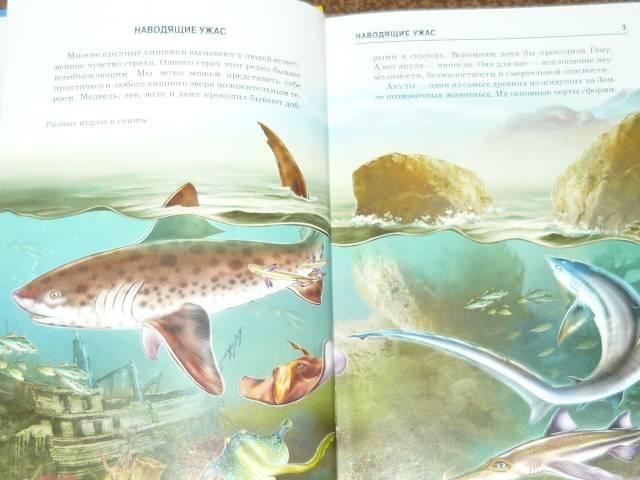 Иллюстрация 1 из 13 для Акулы и скаты - Ю.А. Дунаева | Лабиринт - книги. Источник: Ромашка:-)