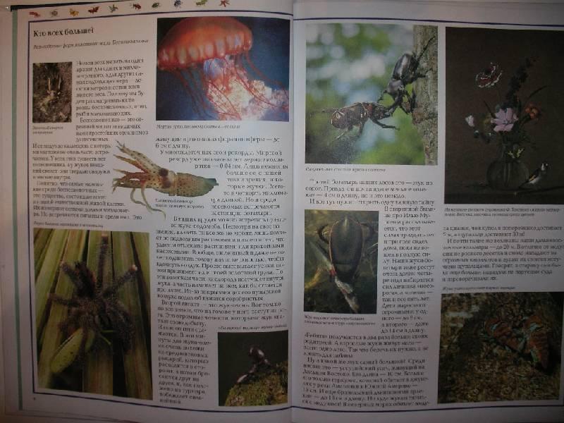 Иллюстрация 1 из 35 для Чудеса природы. Животный мир - Виктор Калашников | Лабиринт - книги. Источник: Tiger.