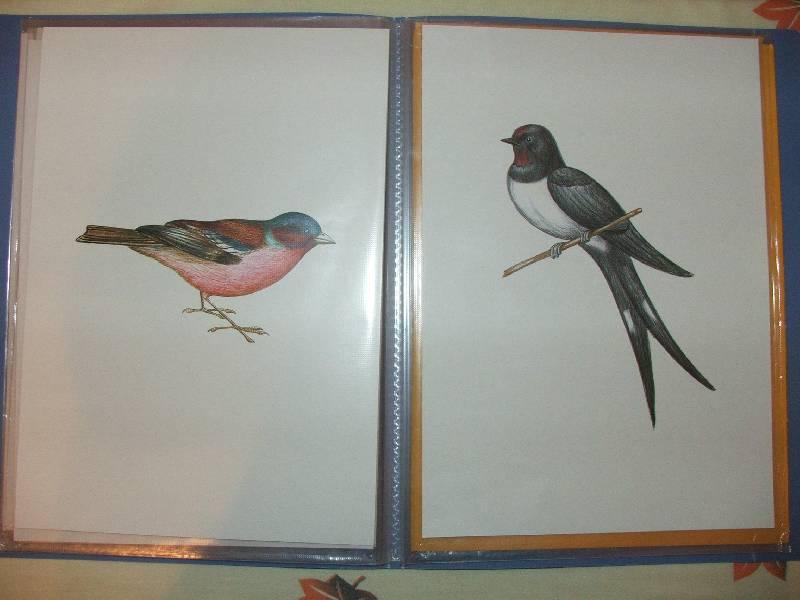 Иллюстрация 9 из 11 для Перелетные птицы.  Демонстрационный материал для фронтальных занятий Лабиринт - книги.