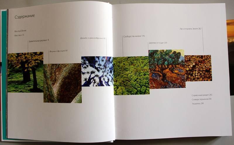Иллюстрация 1 из 64 для Лес - Родд, Стэкхауз | Лабиринт - книги. Источник: sea_dragon