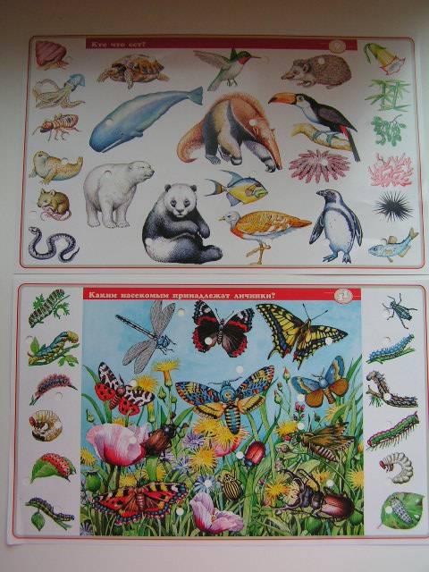 Иллюстрация 1 из 14 для В мире животных. Для детей 7-12 лет. Электровикторина   Лабиринт - игрушки. Источник: ИринаИ