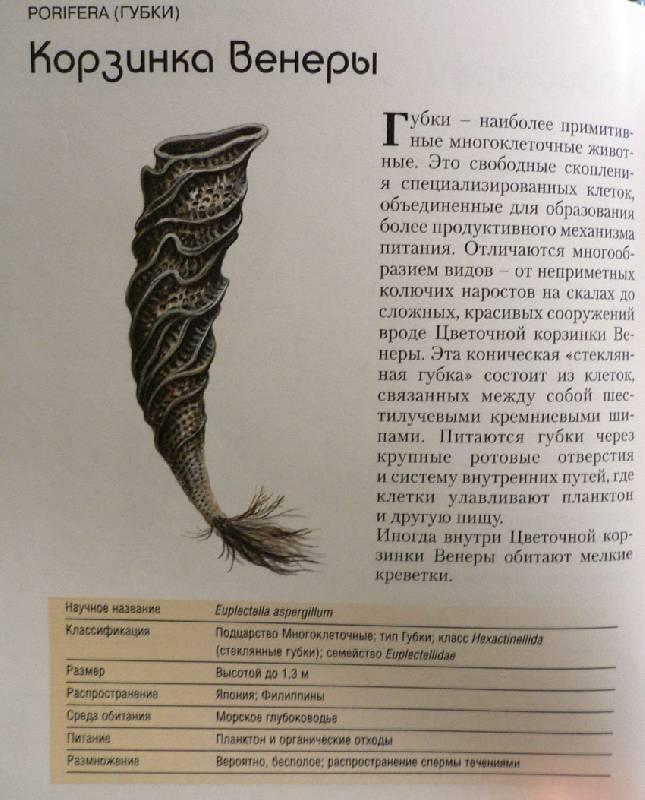 Иллюстрация 1 из 3 для Морские обитатели. От беспозвоночных до млекопитающих - Александр Жарден   Лабиринт - книги. Источник: Почитаем?