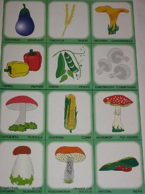 Иллюстрация 1 из 3 для Двойняшки. Овощи и грибы. Лото для детей и родителей | Лабиринт - книги. Источник: Dana-ja