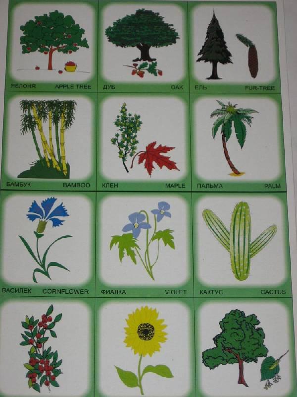 Иллюстрация 1 из 2 для Двойняшки. Деревья, растения, цветы. Лото для детей | Лабиринт - игрушки. Источник: Dana-ja