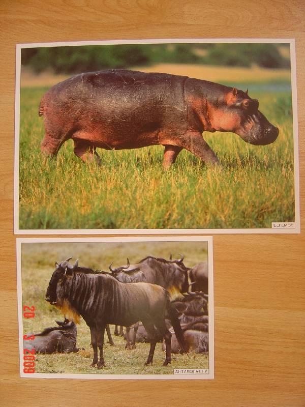 Иллюстрация 1 из 9 для Мир в картинках: Животные жарких стран. 3-7 лет. | Лабиринт - книги. Источник: Анна К.