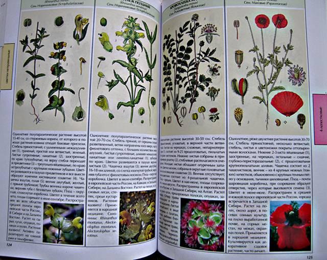 Иллюстрация 1 из 10 для Все о цветах лесов, полей и рек. Атлас-определитель | Лабиринт - книги. Источник: Книголюб