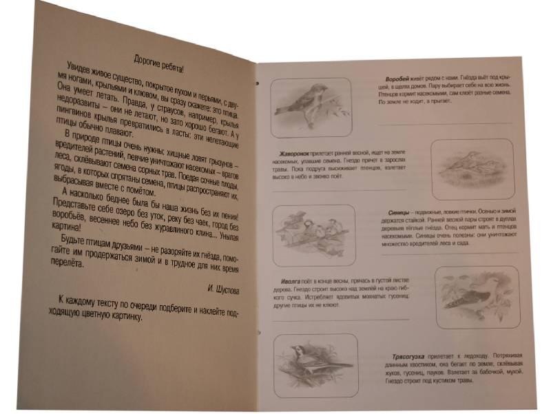 Иллюстрация 1 из 5 для Птицы. Книжка с наклейками   Лабиринт - книги. Источник: *Мария*