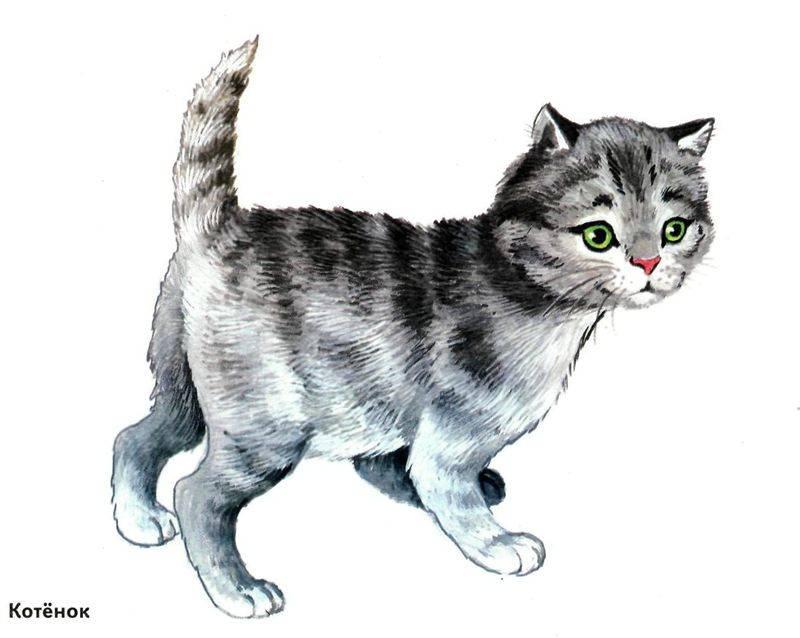 Картинки домашних животных для детей распечатать цветные - 971