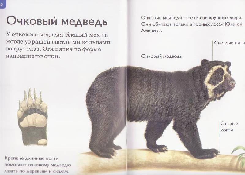 """Иллюстрация 3 к книге  """"Медведи """", фотография, изображение, картинка."""