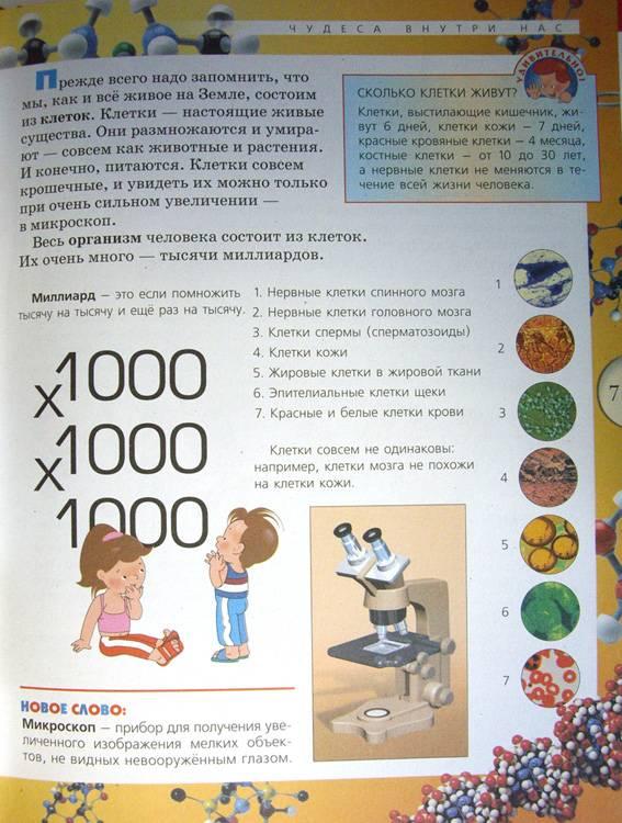 Иллюстрация 1 из 19 для Анатомия человека - Александр Мирер   Лабиринт - книги. Источник: OOlga