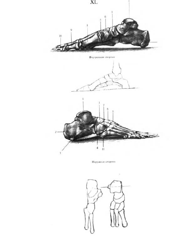 Книги Анатомия Рисования Человека