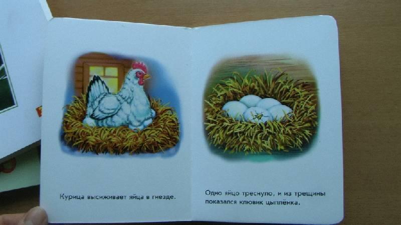 Иллюстрация 1 из 15 для Кто как растет? 22 картинки   Лабиринт - книги. Источник: дважды мама